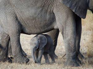 baby-elephant-serengeti_55571_990x742